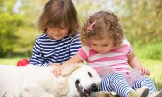 Найдобріші собаки - топ 10