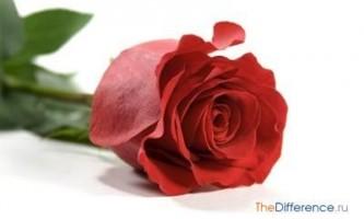 Найкрасивіший квітка в світі