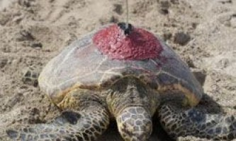 Збір біоданних захищає морських тварин