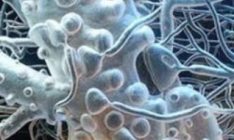 Скільки клітин шкіри ми втрачаємо щодня?