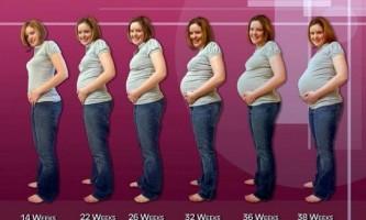 Скільки тижнів триває вагітність?