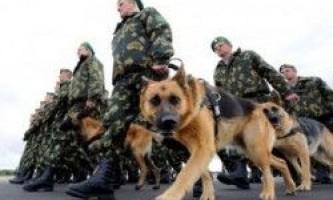 Службові породи собак