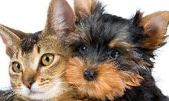 Смертельні захворювання нового покоління: загроза від собак і кішок