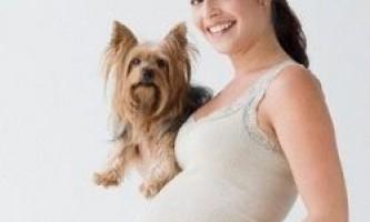 Собака - найкращий друг вагітної жінки