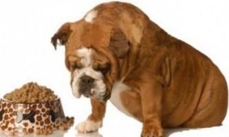 Собака погано їсть - що робити?