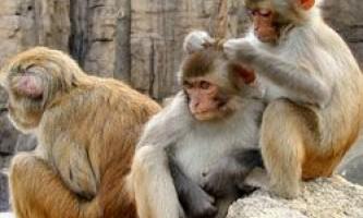 Соціальний статус впливає на імунітет?