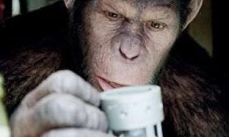 Серед шимпанзе теж зустрічаються генії