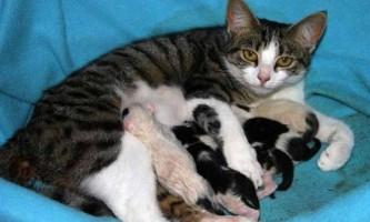 Стерилізація кішок після пологів