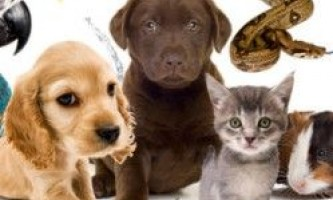 Тест: яка домашня тварина у вас вдома і чому?