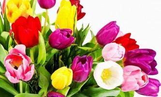 Тюльпан: як виростити в наших садах