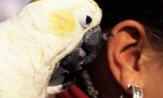 Топ 10 птахів, що говорять