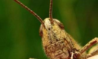 Транспортний шум змінює звуки комах