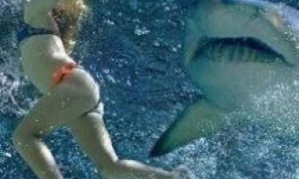 Туристка відбилася від акули, застосувавши силові прийоми