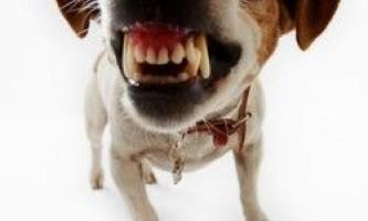 У агресивної собаки сварливий господар