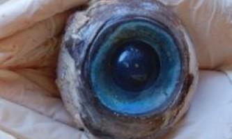 Біля берегів флориди в сша знайшли гігантський очей