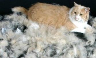 У кішки лізе шерсть: що робити?