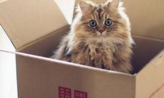 Вчені відповіли на питання, чому кішки люблять сидіти в коробках