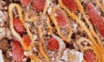 Видалення старих клітин може продовжити життя людини