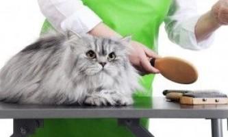 Догляд за шерстю перської кішки