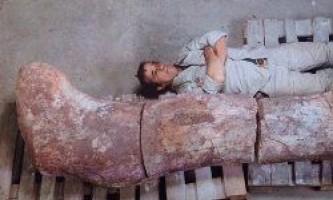 У аргентині виявлений найбільший в світі динозавр