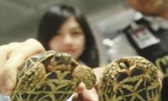 У бангладеш заарештований багаж з рідкісними черепахами