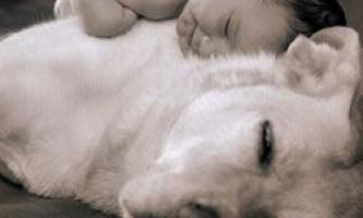 У чому собаки нагадують дітей?