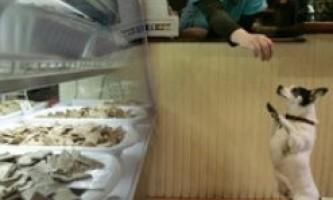В іспанії відкрили пекарню для домашніх улюбленців