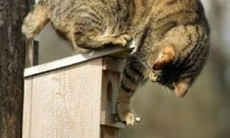 Ваша кішка - кровожерний убивця