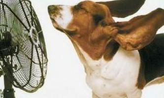 Вентилятор в спеку: більше шкоди, ніж користі
