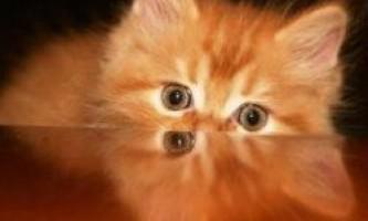 Відеоігри для кішок - останній хіт сезону