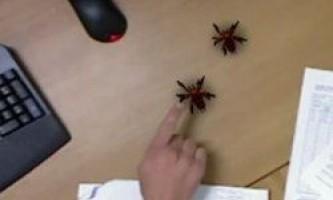 Віртуальні павуки допоможуть позбутися фобії