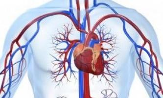 Вплив тренінгу з обтяженнями на серцево-судинну систему