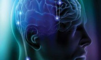 Все, що ви хотіли знати про мозок