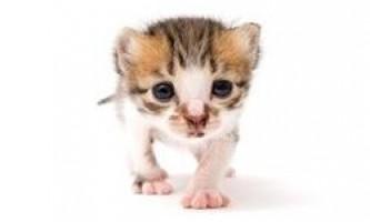 Вибір і годування кошеняти