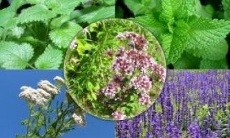 Вирощування лікарських трав