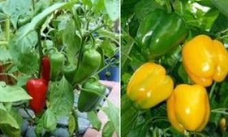 Вирощування різнобарвного солодкого перцю