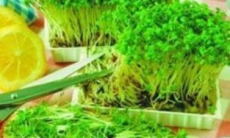 Вирощування зелені в домашніх умовах