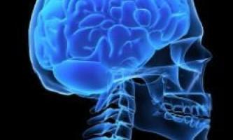 За співчуття і насильство відповідальні однакові частини мозку
