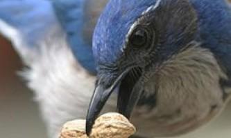"""Навіщо птиці влаштовують """"похорони"""" для своїх небіжчиків?"""