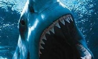 Загадковий морський монстр з`їв 3-метрову акулу-людожера