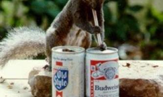 Тварини теж не проти поласувати спиртним?