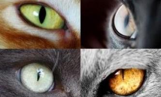 Зір кішок